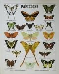 deyrolle papillon